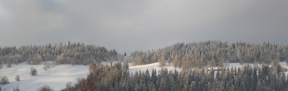 snow on pine trees podhale winter